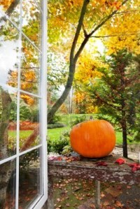 11295359-pumpkin-and-fall-foliage-colors-outside-an-open-home-window