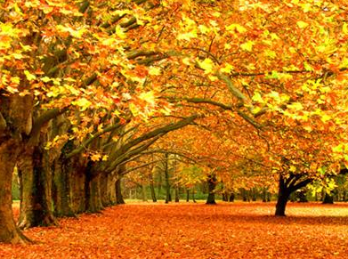 Why I LoveFall